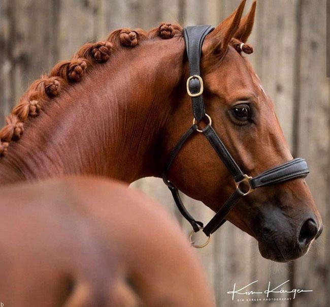 شرط بندی بر روی اسب سواری چه مزایایی دارد ؟
