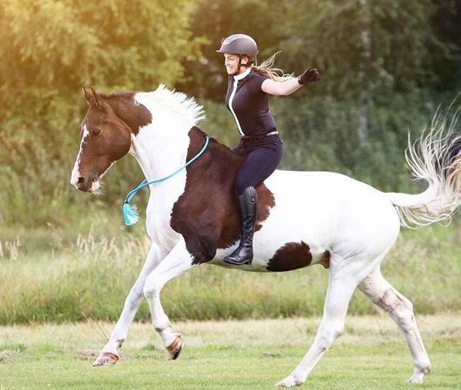 استراتژی برد در شرط بندی اسب سواری (100%تضمینی)