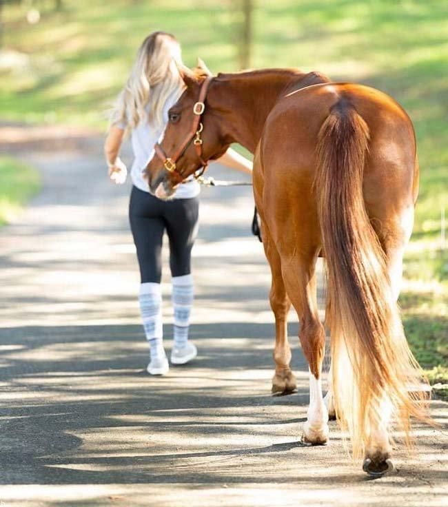 آشنایی با انواع اصطلاحات شرط بندی اسب سواری + آموزش و ترفند