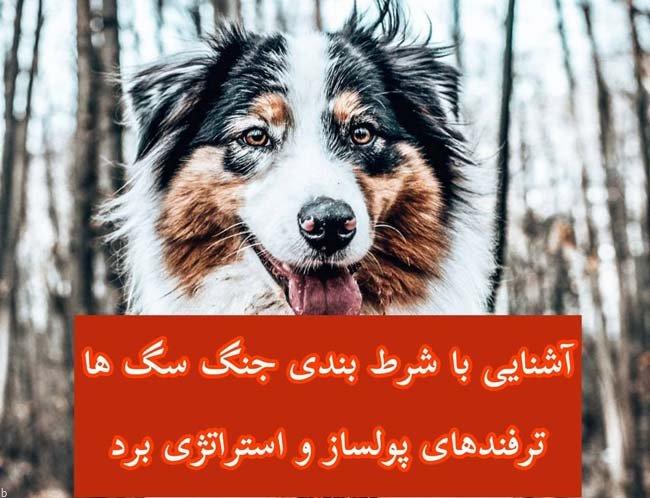 همه چیز در مورد شرط بندی جنگ سگ ها + ترفند های برد و پیش بینی پولساز