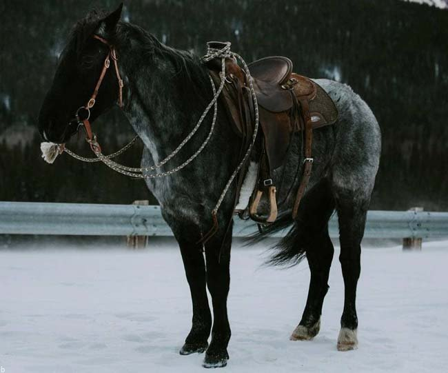 سایت معتبر شرط بندی اسب سواری   ترفند شرط بندی مسابقات اسب دوانی بونوس 200%
